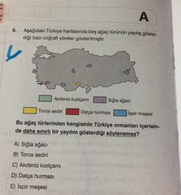 i it 2 A 6. Aşağıdaki Türkiye haritasında beş ağaç türünün yayılış göster- diği bazı coğrafi yöreler gösterilmiştir. Akdeniz kızılçami Sığla ağacı Toros sediri Datça hurmasi ispir meşesi Bu ağaç türlerinden hangisinin Türkiye ormanları içerisin- de daha sı