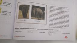 N S A N Lemur'un sadece Madagaskar'da yaşaması Konya Karapınar'ın çölleşmeye başlaması Coğrafya Öğretmeni Muratcan Bey 11-D sınıfı öğ- rencilerine ekosistem konusunu anlatırken akilli tahtada yandaki fotoğraflan göstermiştir. Öğretmen : Afrika filleri ile